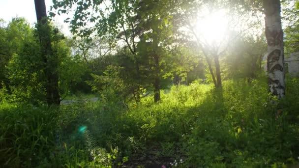 Gyönyörű természet: reggel-a ködös tavaszi erdő a nap sugarai. Napfény-zöld erdőben, tavaszi idő
