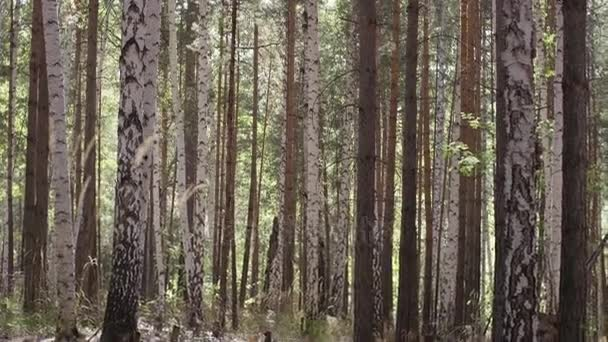 Lesní stromy. přírodní zelené dřevo. Přírodní park strom. Podzim v lese