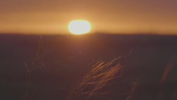 Zelené louce letní krajina, timelapse. Mraky a modrá obloha pole