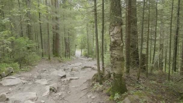 Horská silnice a les. Trnitá cesta v lese