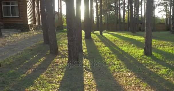 Krásné zdobené zdobené domácí zahradní pěšiny lemované stromy živé ploty trávy. Krásné dvorku za slunečného dne