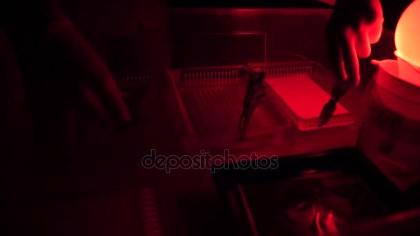 Fotógrafo de proceso impresión cuarto oscuro usando ampliadora para ...