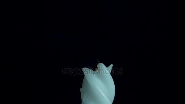 Bílé dlouhé svíce na černém pozadí. Jediná svíčka světlo plamene. Dlouhý plamen, staré svíčky. Bílá svíčka, černé pozadí. Bílý lesklý válec nesvětelné izolované na tmavém pozadí