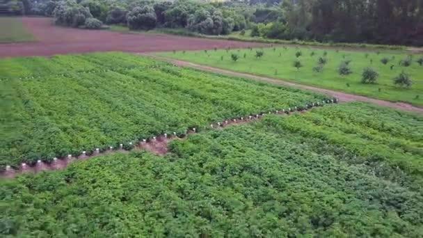Letecká dron záběr zelený dům obklopen zemědělskou půdu. Klip. Letecký pohled na krajinu. Zemědělští dělníci chystá pro pěstování zeleniny, ovoce a byliny. Zeleninové pole a