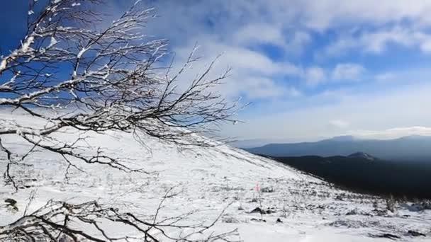 Osamělý strom větev uprostřed sněhu na horách. Zimní les v horách. Video. Sníh na stromech. Vánoční krajina. Zimní hory. Krajina s zasněžené stromy