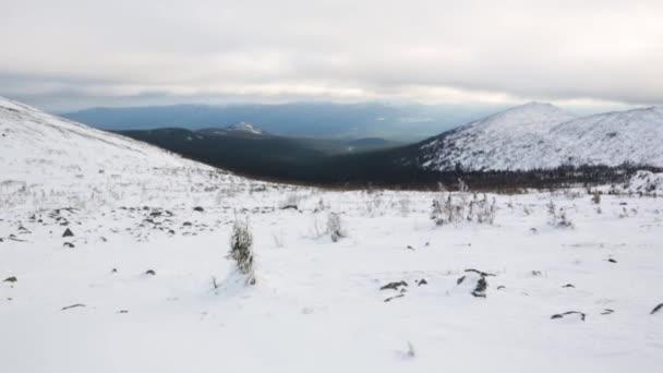 Zimní les v horách. Video. Sníh na stromech. Vánoční krajina. Zimní hory. Krásná zimní krajina pod sněhem zahrnuty stromy