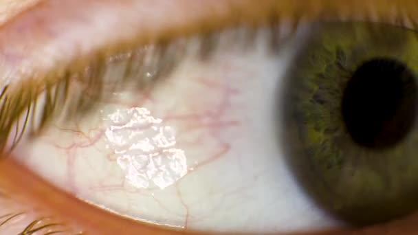 Macro of a beautiful eye. Video. Macro shot of a womans eye. macro eye brown. Very sharp macro of an eye