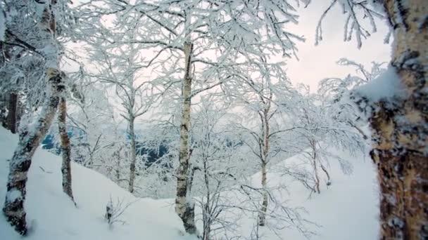 Téli táj hó háttér fák zord téli táj havas fák természet ág. Videó. Fagyasztott erdő és rét-Kárpátok panoráma. Fák fedezi a hó