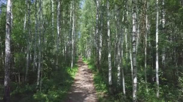 Krásné ráno světlé slunné letní březových lesů s cestou. Klip. Cesta přes Prosluněný březový háj v létě. Pozadí, příroda. Krásný pohled, březové háje, kterým prochází cesta