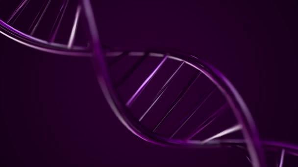 Animovaný řetězec Dna. Fialový řetězec DNA pomalý pohyb - 3d animace