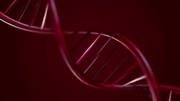 Animovaný řetězec Dna. Červená řetězec DNA zpomalené - 3d animace