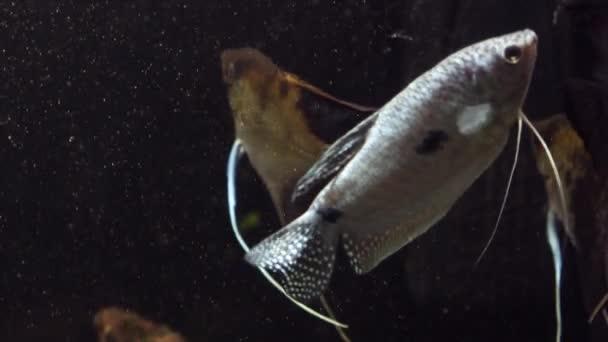 Pesci In Un Acquario Pesci In Un Acquario Su Sfondo Blu Pesci In