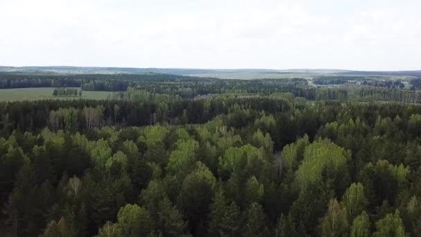 Letecký pohled na lesní a zelenou louku, letní krajina přírody. Záběry ze skladu. Malebná venkovská pole z ptačí perspektivy a zeleného háje.