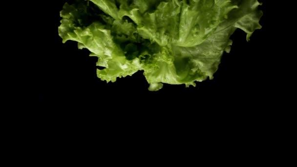 Detailní záběr čerstvého zeleného salátu rotujícího izolovaně na černém pozadí, zdravá výživa. Záběry ze skladu. Krásný čerstvý zelený salát připravený k přípravě jídla.