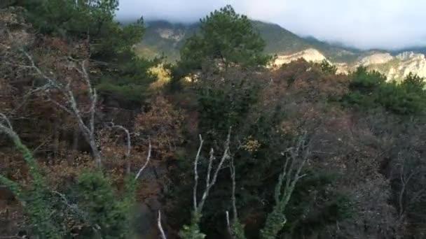 Őszi táj száraz fák és zöld fenyőfák nagy hegyekkel borított reggeli köd. Lelőtték. Légi kilátás sűrű vegyes erdő és óriás ködös hegyek.