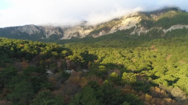 Autumn landscape with dry trees and green pine trees with great mountains shrouded in morning mist. Shot. Aerial view of dense mixed forest and giant foggy mountains.