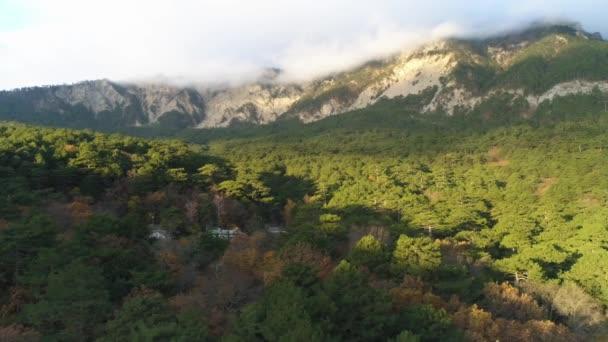 Podzimní krajina se suchými stromy a zelenými borovicemi s velkými horami zahalenými ranní mlhou. Zastřelen. Letecký pohled na hustý smíšený les a obří mlhavé hory.