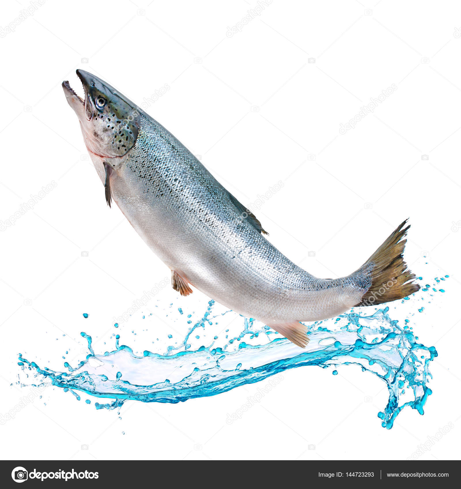 Salmon jumping out of water images for Outside fish
