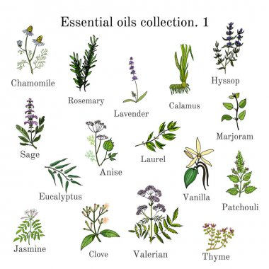 Set of essential oil plants. Hand drawn ector illustration