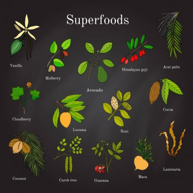 Set of hand drawn superfood acai, goji, cacao, lucuma, vanilla, mulberry, avocado, noni, carob, guarana, maca, coconut, cloudberry, laminaria