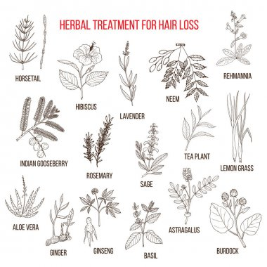 Medicinal herbs for hair loss treatment