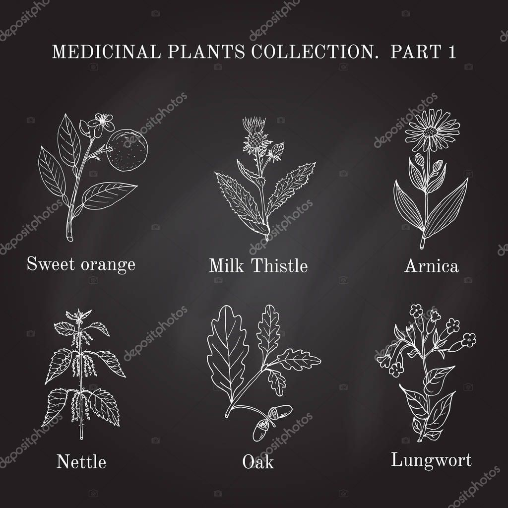 Vintage collection of hand drawn medical herbs and plants.