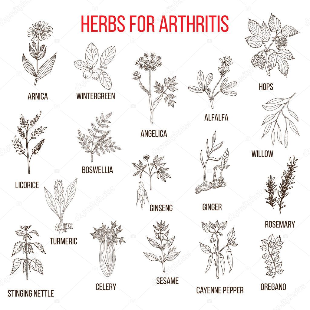 Herbs to fight arthritis boswellia, willow, celery, ginger, arnica, wintergreen, andelica, alfalfa, hop, licorice, ginseng, rosemary, turmeric, stringing nettle, sesame, cayenne pepper, oregano