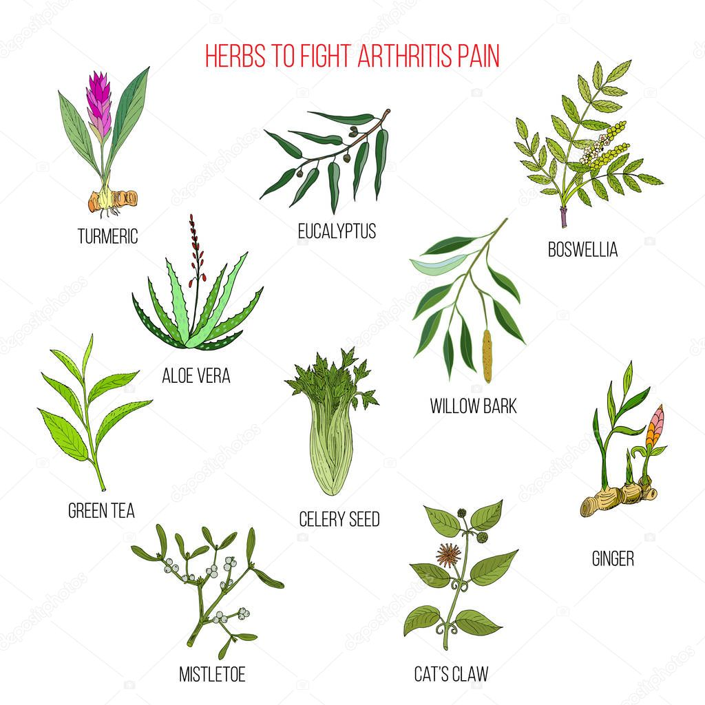Herbs to fight arthritis pain turmeric, eucalyptus, boswellia, aloe vera, willow, celery, tea, mistletoe, ginger, cat claw
