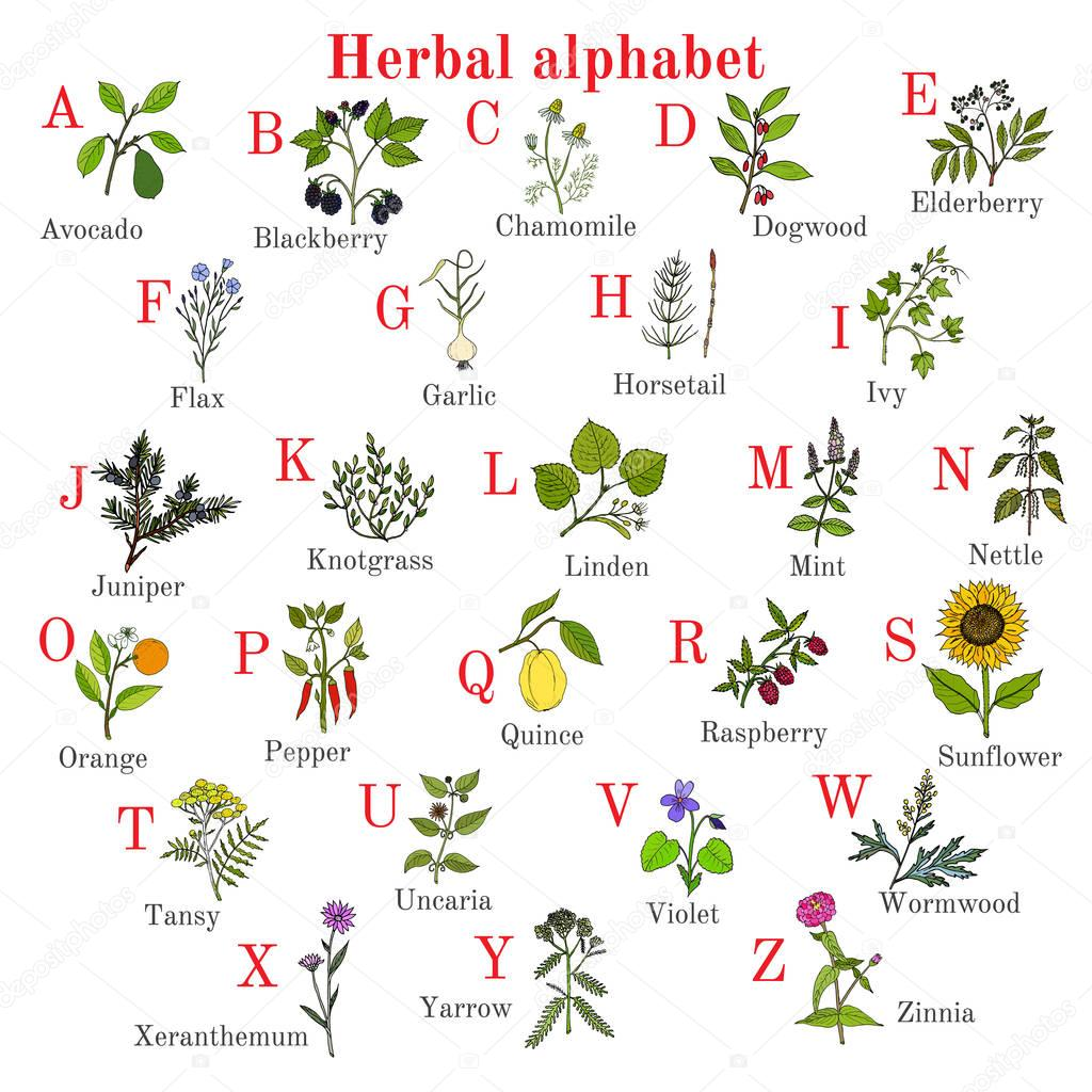 Herbal alphabet, herbs and plants collection