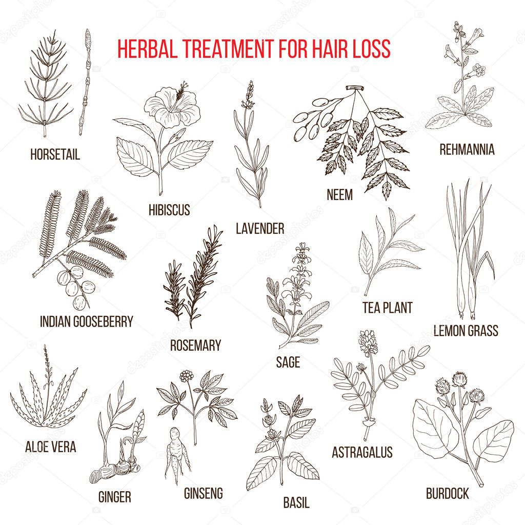 Medicinal herbs for hair loss treatment