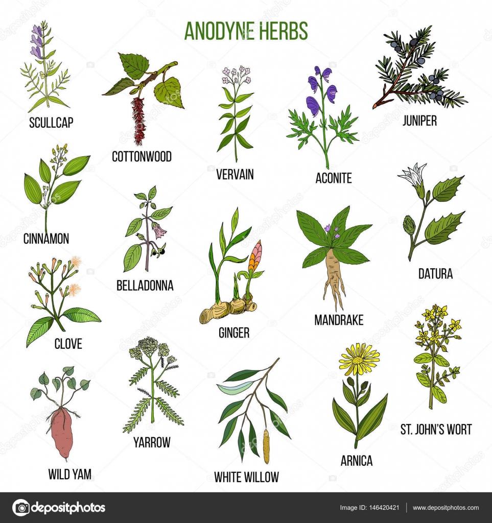 Hierbas anodinas mano dibujada conjunto de plantas for Mezclas de plantas medicinales