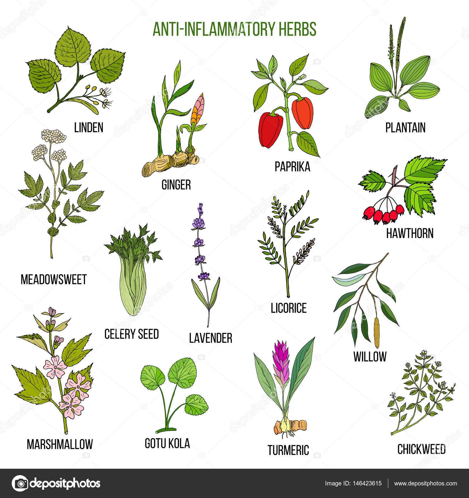 Hierbas antiinflamatorias mano dibujada conjunto de for Hierbas y plantas medicinales