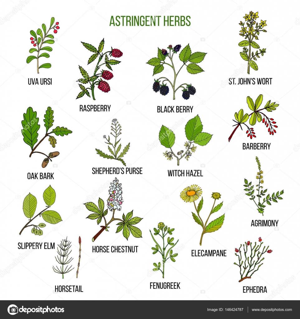 Hierbas astringentes mano dibujada conjunto de plantas for Todas las plantas ornamentales