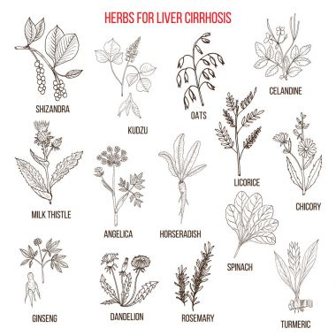 Best herbal remedies for liver cirrosis