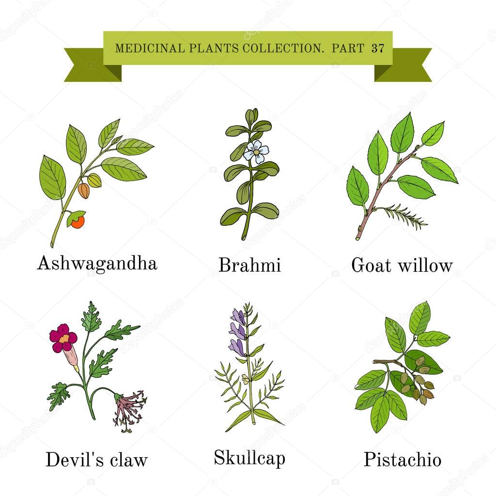 Vintage collection of hand drawn medical herbs and plants