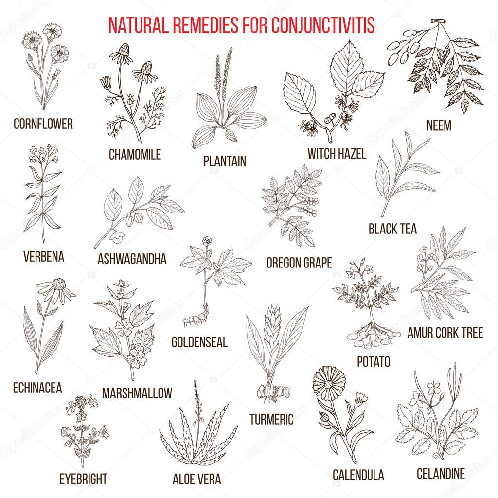 Best herbal remedies for conjunctivitis.