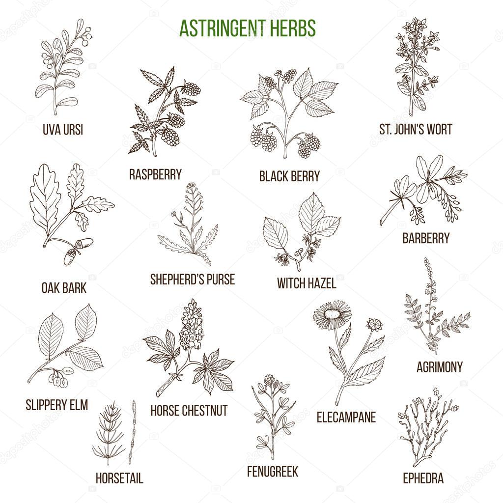 Astringent herbs. Hand drawn set