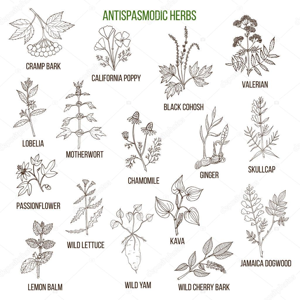 Antispasmodic herbs. Hand drawn set of medicinal plants