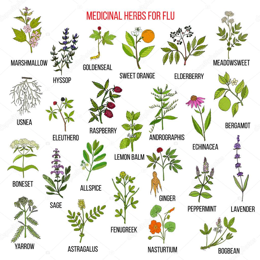 Best medicinal herbs for flu
