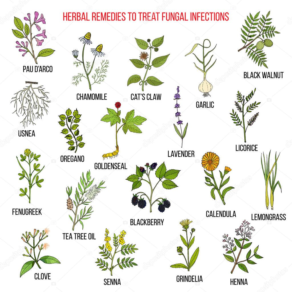 Best herbal remedies for fungal infections