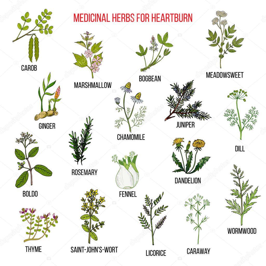 Best herbal remedies for heartburn