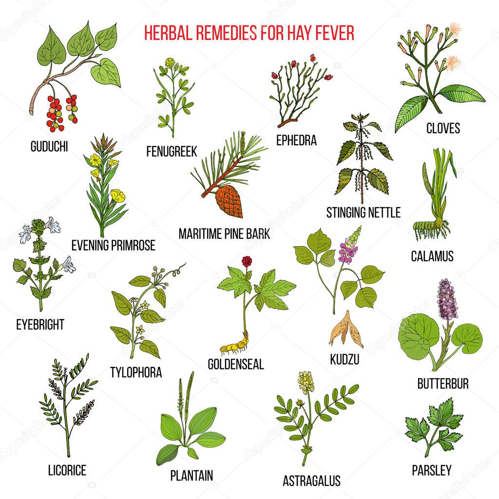 Best herbal remedies for hay fever