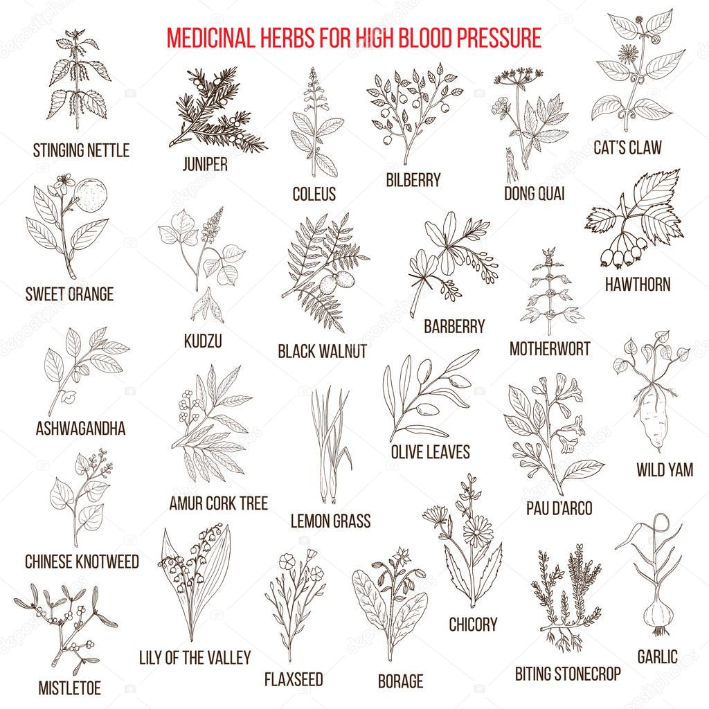 Best medicinal herbs for high blood pressure.