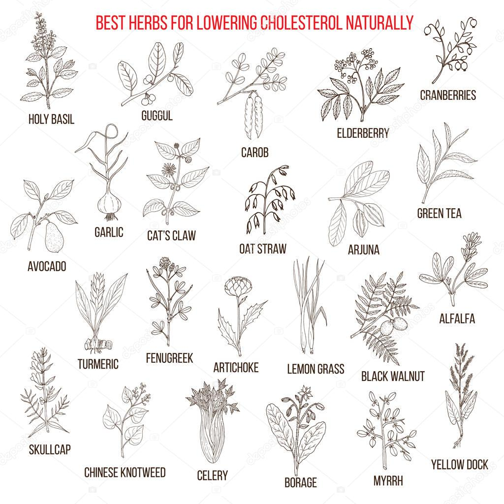 Best medicinal herbs for lowering cholesterol