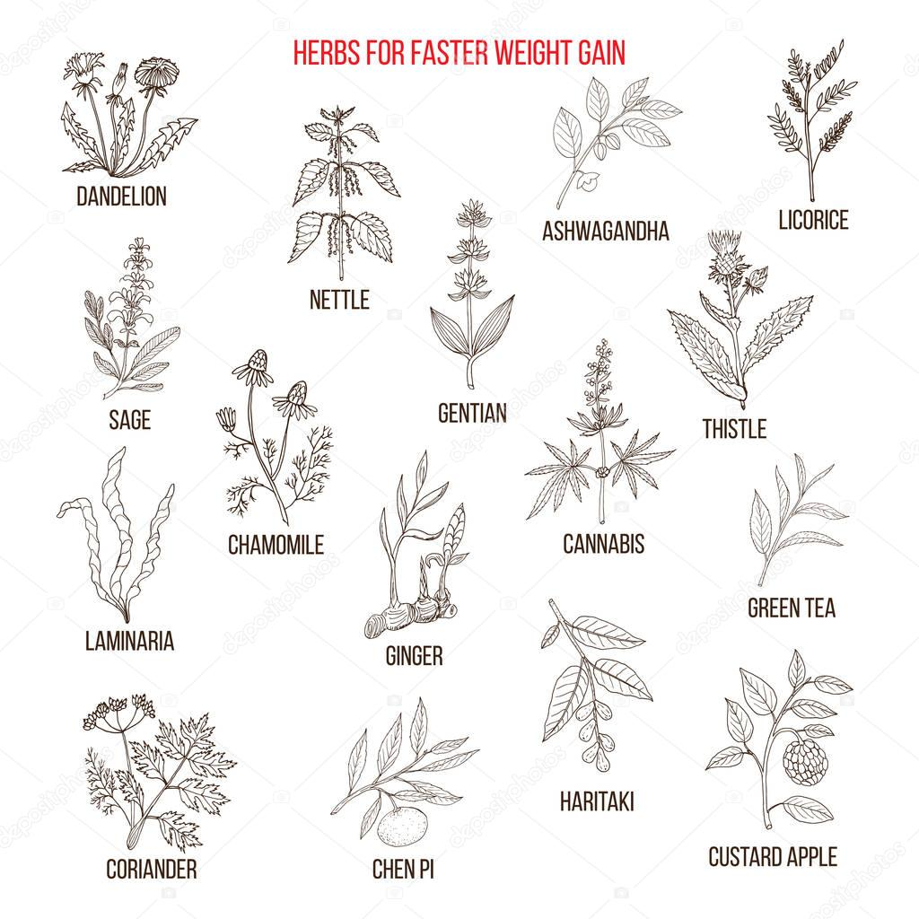 Best herbs for faster weight gain