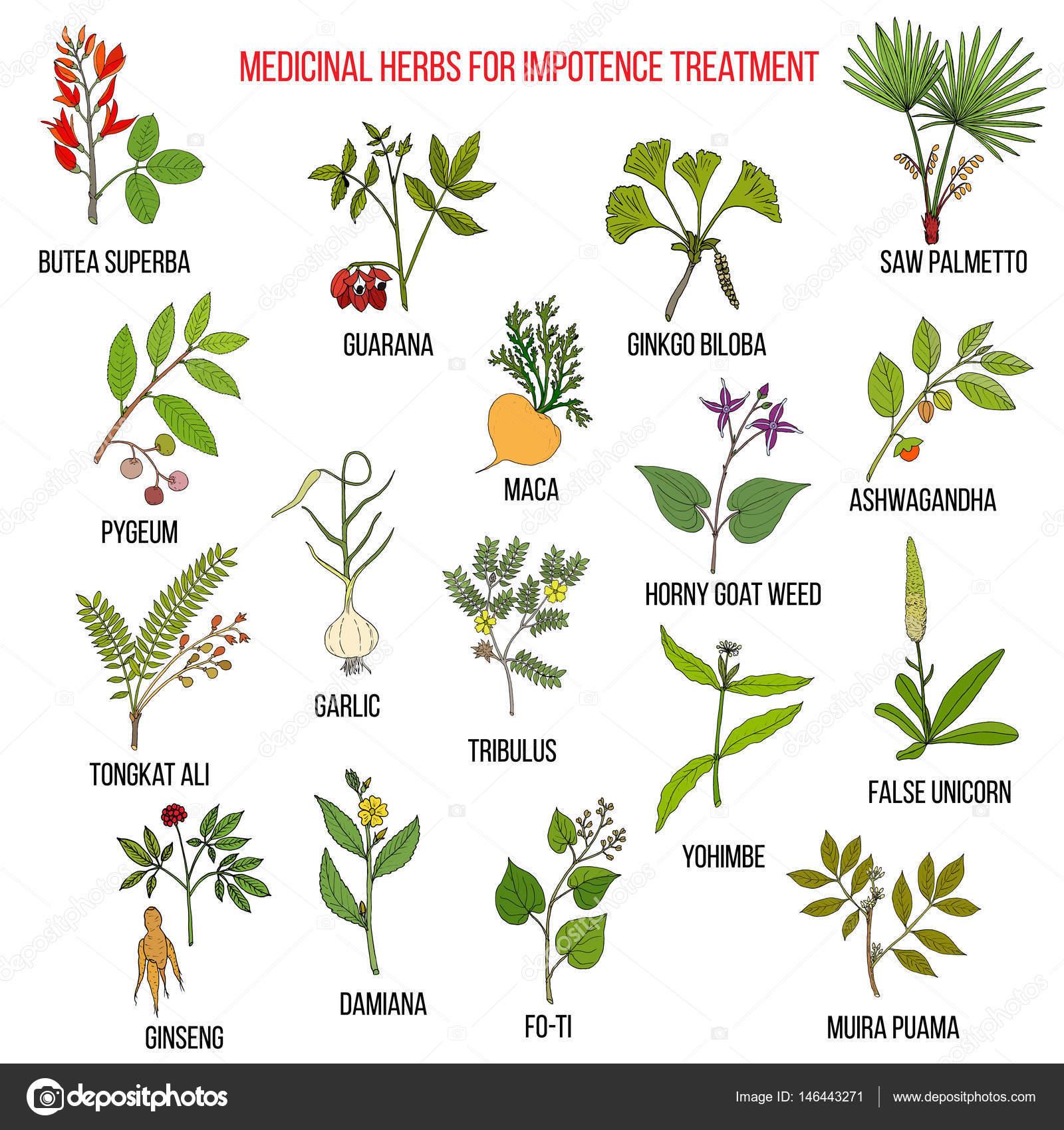 травы в лечении импотенции