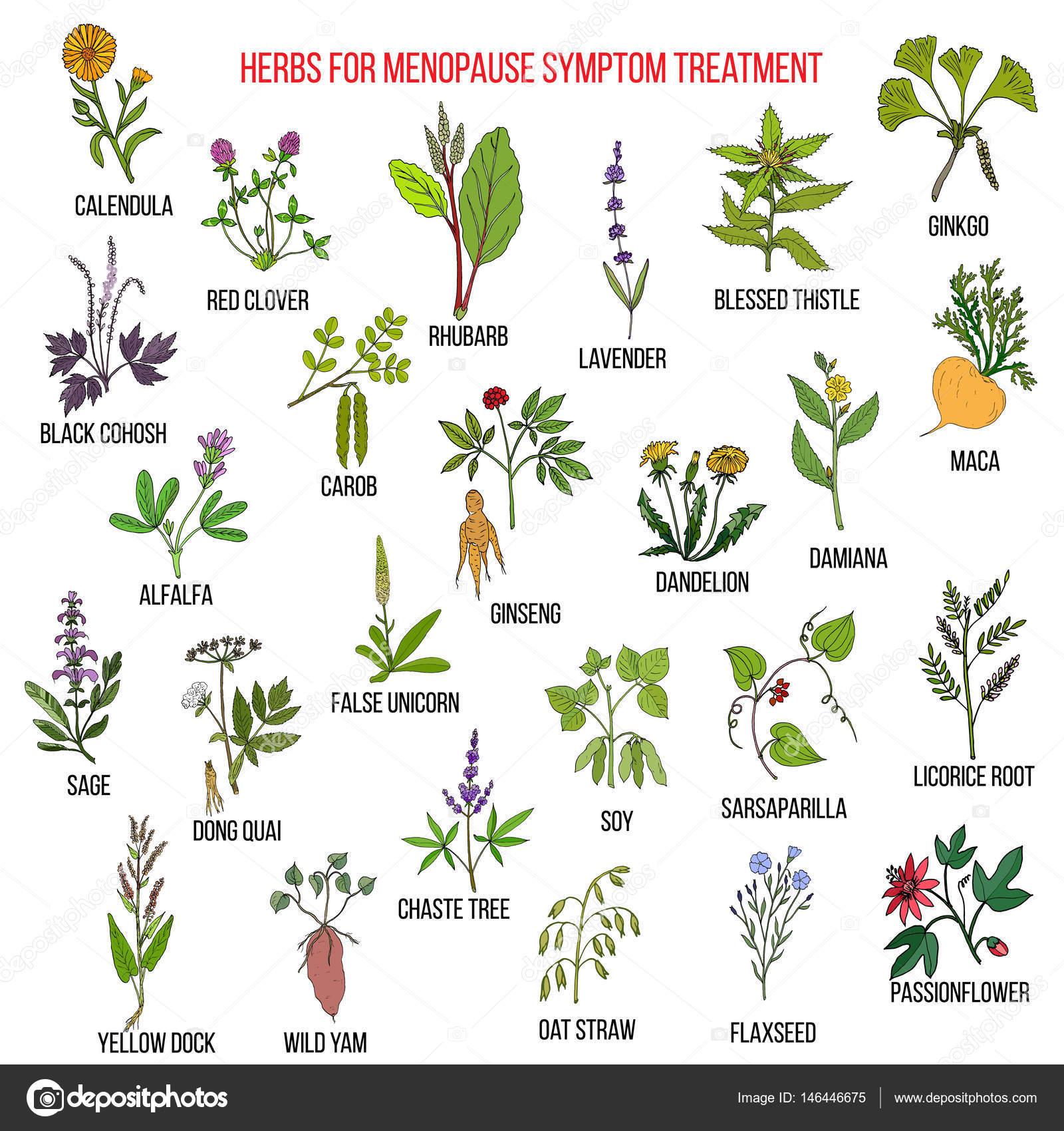 meilleures plantes pour le traitement de sympt mes de la. Black Bedroom Furniture Sets. Home Design Ideas