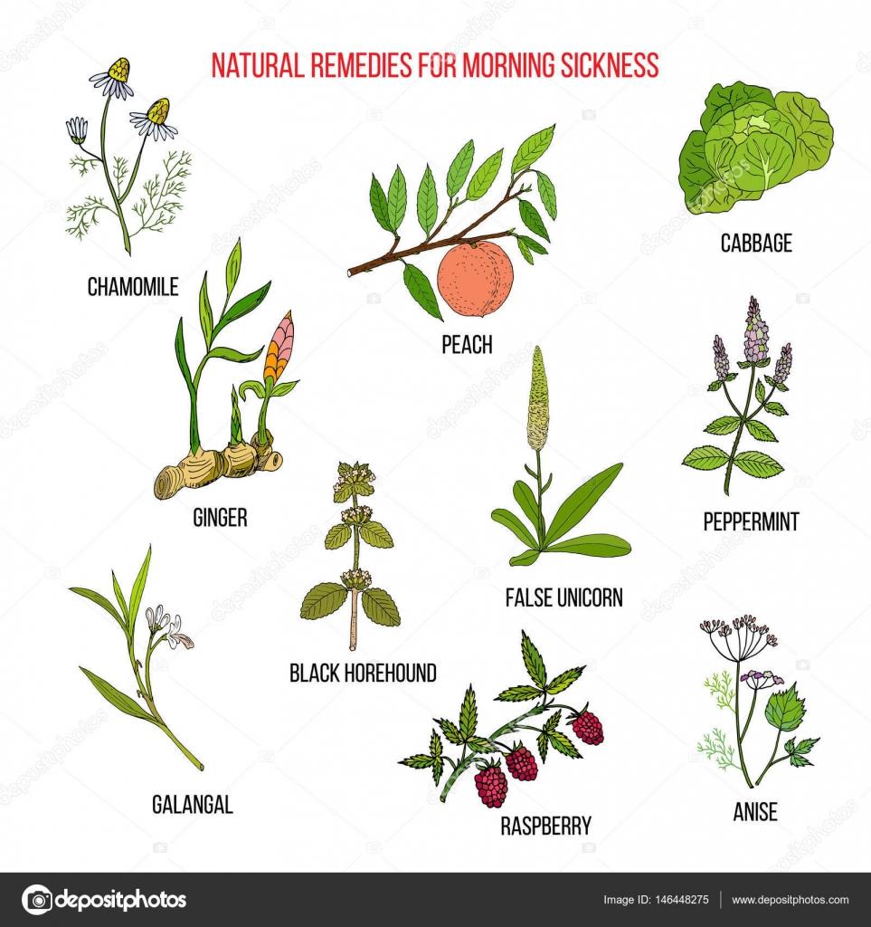 Sabah Bulantısına Ne İyi Gelir: Sabah Bulantısına Bitkisel Çözümler