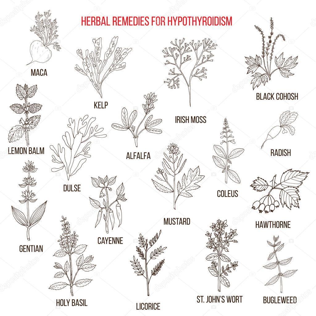 Best herbal remedies for hypothyroidism