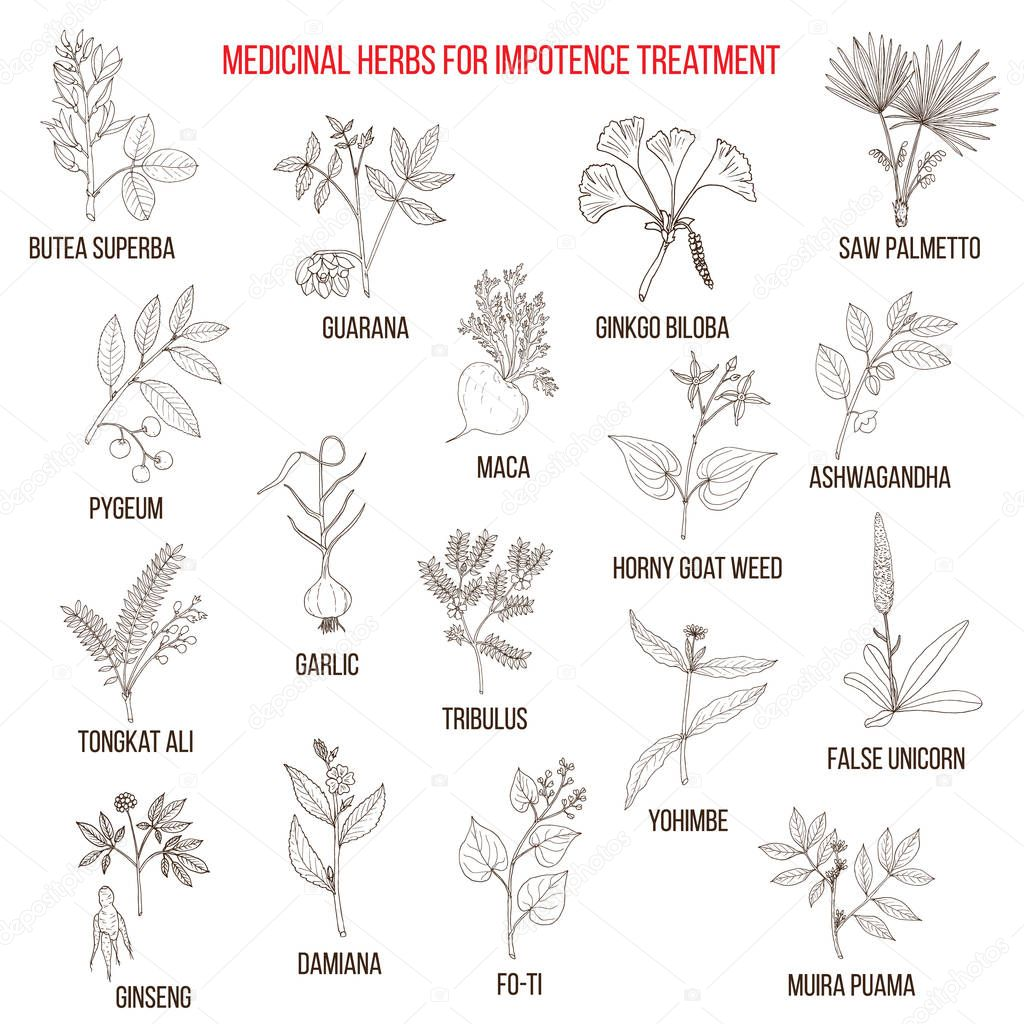 Best herbs for impotence treatment